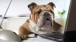 Dog Ate Your Sick Note? No Matter. This Company Allows Workers To Take 'Sick Pet