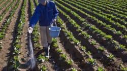 アベノミクス:第二次成長戦略:農業改革と課題
