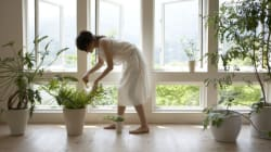 Planting A Natural Way To Clean Indoor