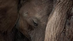 Photographer Hopes These Stunning Photos Of Elephants Will Help Save