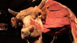 Sous la (vraie) chair des animaux