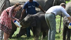 Kate Middleton Wears Topshop To Feed Baby Rhinos And