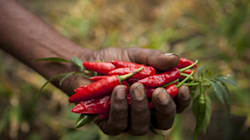 The Morning Wrap: Farmers To Sell Produce On E-Market Platform, Maharashtra Outlaws Social