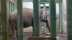 Renewed Calls For Independent Health Assessment For Ailing Elephant