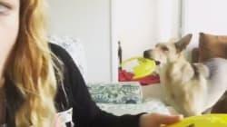 La padrona rompe il suo gioco, il cane reagisce