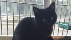 Bellini, il gattino ermafrodita, ha stupito tutti al Centro