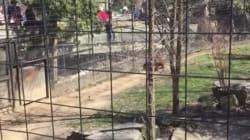 Une femme franchit une clôture du quartier des tigres au zoo de Toronto