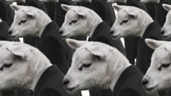 Dear Indian VCs, Your Herd Mentality Is Killing