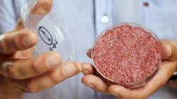 Comida de laboratório: A ciência pode nos ajudar a alimentar o