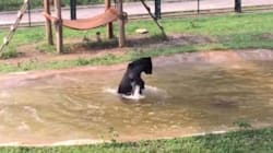 Non vede più solo le sbarre della sua gabbia: ora Tuffy è libero ed è l'orso più felice del