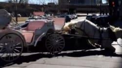Troublante vidéo d'un cheval et d'une voiture entrant en collision à