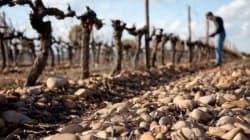 Les vins de Michel Gassier, porte-étendards des