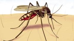 10 Commandments To Make Malaria Buzz Off