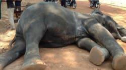 Muore di fatica dopo aver trasportato per 15 anni i turisti in giro per la