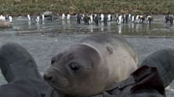WATCH: This Baby Seal Wants To Say