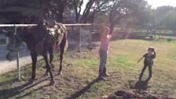 Watch This Horse