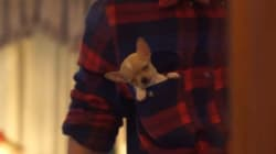 This Pocket Puppy Will Make You Reevaluate Your Pet