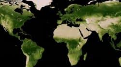 Se sulla terra il verde aumenta è