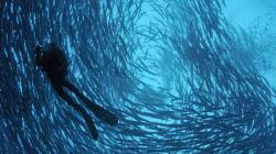 Ci voleva l'attacco di un barracuda per farmi capire che preferivo