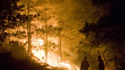 Forest Fire Claims 5 Lives In Uttarakhand, NDRF Forces