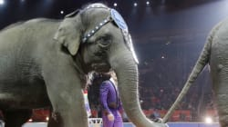 End Of An Era: Ringling Bros. Circus Halts Elephant