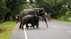 Man-Animal Conflict In Tamil Nadu Gets No Attention From Any Political