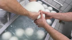 Mozzarella di bufala, controlli concordati e false certificazioni. A rischio il marchio