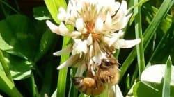 花粉を運ぶ生物の価値を初評価/年間26兆~65