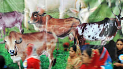 Kerala Student Who Helped Organize Beef Festival Allegedly Barred From PhD Entrance