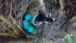 La storia di questa mamma uccello che lascia