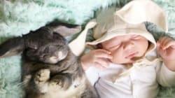 Con un bebé y cuatro conejitos sólo pueden salir fotos tan bonitas como