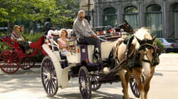 Pas de calèches dans le Vieux-Montréal cet été