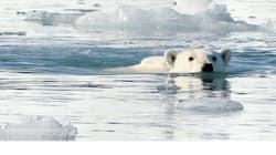 Student Passions Awakened By Visit To This Arctic