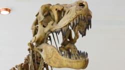 Les tyrannosaures auraient eu des