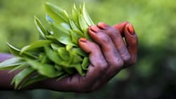 How Assam's Tea Gardens Are Rooted In The Abuse And Torture Of