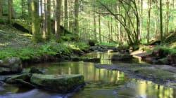 Financiers de tous bords, arrêtez de proclamer la forêt comme niche