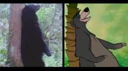 Ces ours se prennent pour