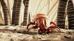 Why Dust Mites May Make You