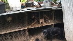 11 chiens qui n'étaient jamais sortis de leur cage ont été