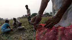 Farmer Earns ₹1 After Selling One Tonne Of