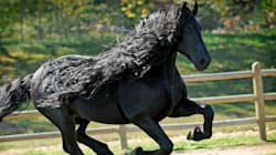 Ce cheval a sûrement la plus belle crinière du