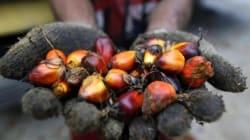 L'olio di palma sbarca a Montecitorio: M5S ed esperti ne chiedono messa al