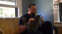 Une langue en silicone pour lécher votre chat comme un chat. Oui,
