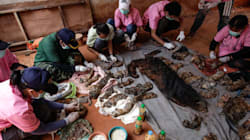 Dead Tiger Cubs Found In Thai Temple Freezer During Animal Trafficking