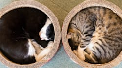 丸まって寝る猫たちを見ていると...こっちまで眠くなるの(画像集)