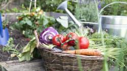 En juin, 250 kg de récoltes dans 37 m2 de