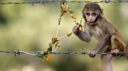 WATCH: Errant Monkey Steals ₹10,000 From A Jewellery Store In Andhra
