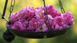 L'art du parfum à Grasse: des savoir-faire transmis depuis trois