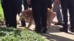 Le dernier chien sauveteur du 11 septembre est mort
