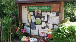 Le gorille abattu a droit à un mémorial dans son